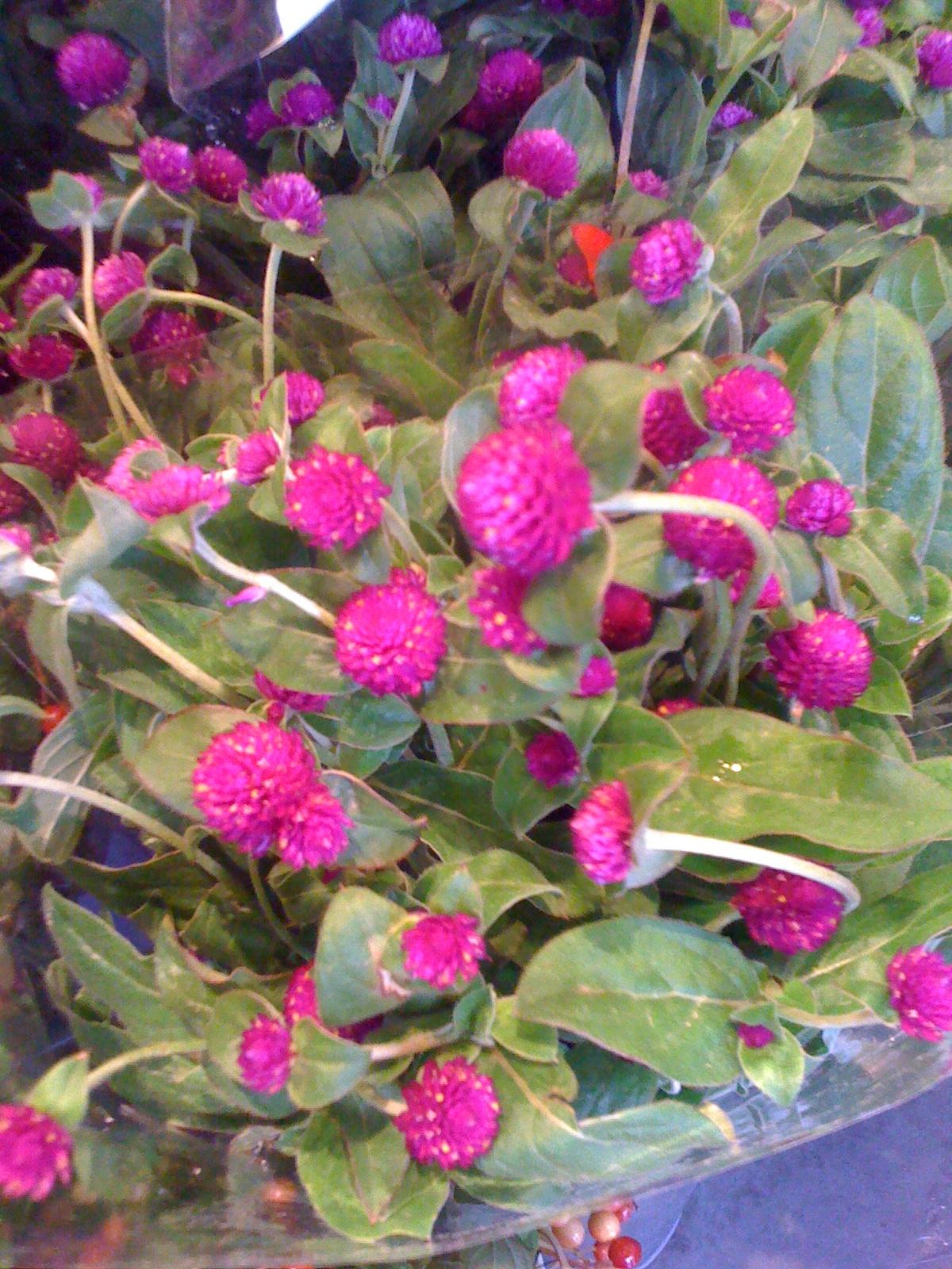Flowers in season brooklyn brownstone for Flowers that are in season